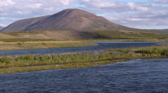 Iceland, Lupin on the River WS Stock Footage