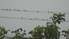 Group small swallow bird relax electric wire scratch plumage noise avian cloudy  - stock footage