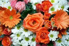 rose gerbera daisy chrysanthemum - stock photo
