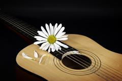 Stock Photo of white daisy on guitar