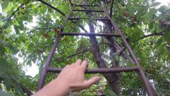 Slow Motion up the Stairs, Cherry Tree Stock Footage