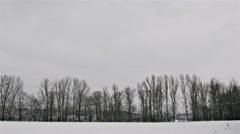 Winter Trees in Avenue Stock Footage