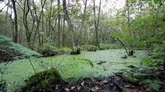 Dolly shot of beautiful swamp in Holland Stock Footage