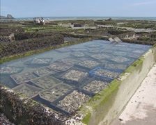 Fresh Oyster harvest in special ponds called claires Stock Footage