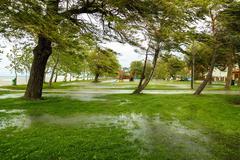 Flooded terrain in Balaton Stock Photos
