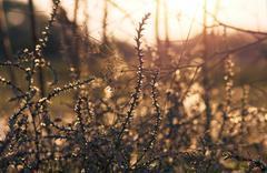 Wild flower in sunset Kuvituskuvat