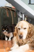 Golden Retriever and Persian cat books - stock photo