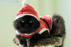 Black Santa Cat On Condo Cats Stock Photos