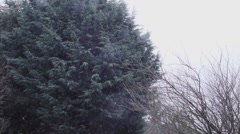 Large Evergreen Tree and Snow Falling Slow Motion Stock Footage