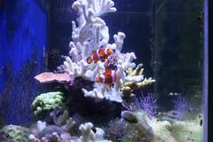 Coral in aquarium Stock Photos