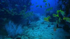 Underwater ways in the Andaman Sea Stock Footage