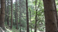 Mountain landscape in a beautiful forest, summer holiday, vacation trip. Stock Footage