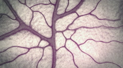 Capillary, brain Stock Footage