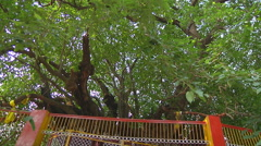 The wishing tree at Jyotirmath in Uttarakhand, India Stock Footage