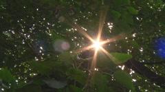 Sun rays through leaves at Jyotirmath in Uttarakhand, India Stock Footage