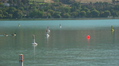 A gaggle of geese on the lake Stock Footage