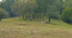 German soldier fox hole 05 Stock Footage