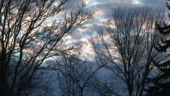 Winter Trees with Morning Sunrise Time Lapse Stock Footage