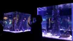 People Visiting Aquarium - stock footage