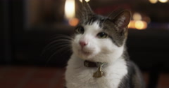 Handsome House Cat In Front of Fireplace Stock Footage