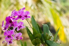Purple orchid flower, selective focus with blur background - stock photo