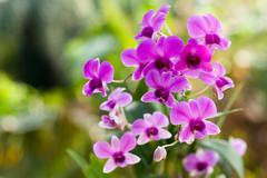 Purple orchid flower, selective focus with blur background Stock Photos