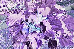 Reversed useful plant Stock Photos