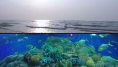 Variety of Ocean Fish Species Swimming Together and Ocean Sunset - Framed. Stock Footage