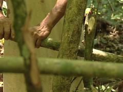 Lacandon doing a hut in the jungle of Palenque Stock Footage