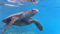 Green sea turtle swimming in the sea Stock Footage