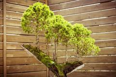 five bonsai trees on a  tree stub - stock photo