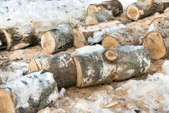 Pile of sawn trunks of birch trees in the forest. Firewood for the winter Kuvituskuvat
