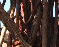 Himba making a hut Stock Footage