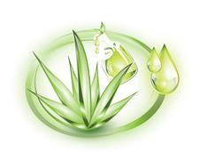 Aloe vera and essential oil extract Stock Illustration