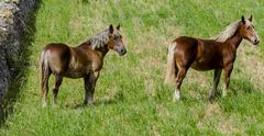 beautiful horses in pasture in the countryside of Puglia. - stock photo