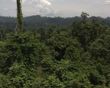 Indonesian Jungle Stock Footage
