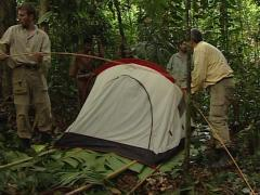 Mix of cultures. Caucasian man with punan tribe assembling a tent - stock footage