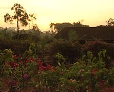 Dawn in the jungle. Town in somalomo reserve Stock Footage