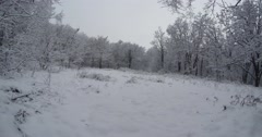 large snow-covered fields in a fantastic winter forest - stock footage