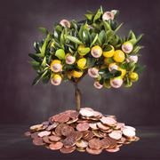 Money tree Stock Photos