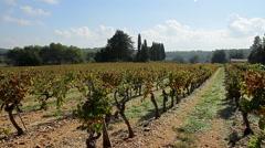 vineyard grapes pan provence wine making - stock footage