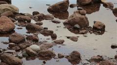 Gentle Ripples in Sandy Sea Rockpool Stock Footage