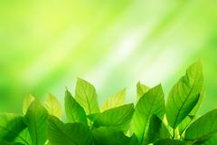 Photo of Green leaf on bright and light green color blur background Stock Photos