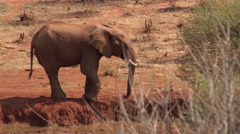 Elephant at river drinking 2 Stock Footage