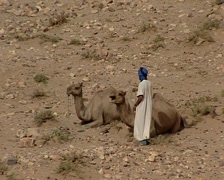 Berber man lead a caravan of dromedaries Stock Footage