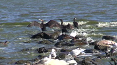 Birds cormorants and seagulls on sea coast Stock Footage