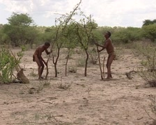 Bushmans making a hut in the kalahari Stock Footage