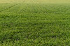 Rural farming - stock photo