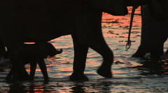 Stock Video Footage of Elephant herd and new born baby in silhouette at waters edge