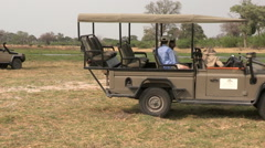 Tourists on safari vehicle looking at lions - stock footage